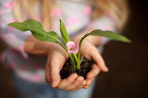 Hands holding a flowering bulb